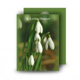 Snowdrops Standard Memorial Card