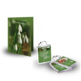 Snowdrops Standard Package